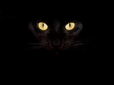 Can Cats See In Pitch Black