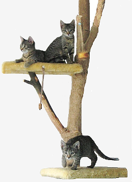 Kittens on Cat Tree