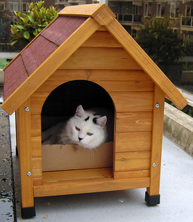 doghouse with cat