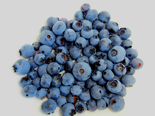 Container-Grown Blueberries