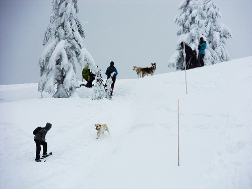 Snowshoeing is a Great Activity to Share with a Dog