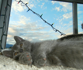 Kitten and Clouds