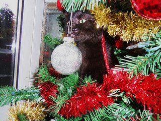 Kitten in Christmas Tree