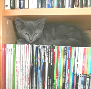 Kitten on the Bookshelf
