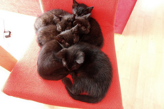 Kittens on a Chair