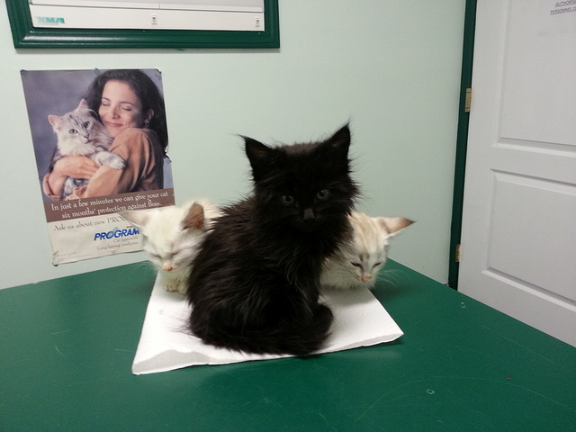 Sick Kittens at the Vet