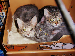 Three Feral Kittens