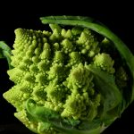 Romanesco Broccoli, Image Courtesy of Jon Sullivan, PDPhoto.org