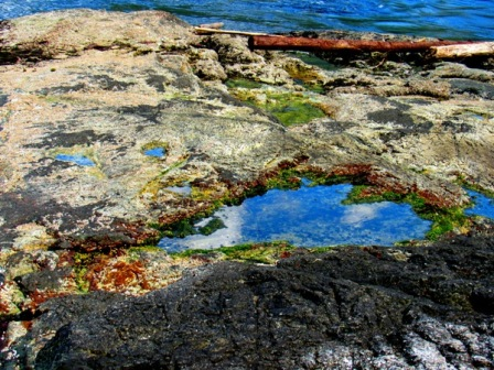 Skookumchuck Narrows Heart-Shaped Tidal Pool