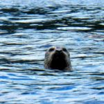 Sunshine Coast Seals