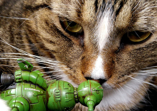 Cat with Starbug