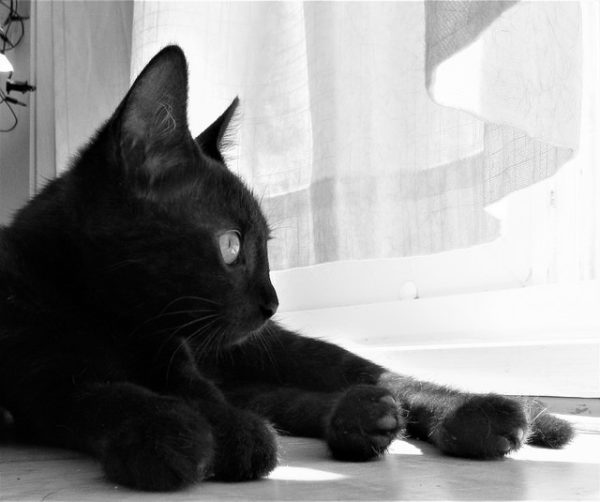 Thoughtful Cat