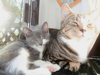 Resting Cat and Kitten