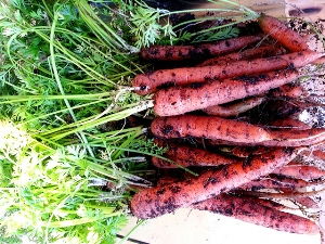 Container Carrots