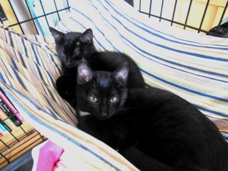 Kittens in a Hammock