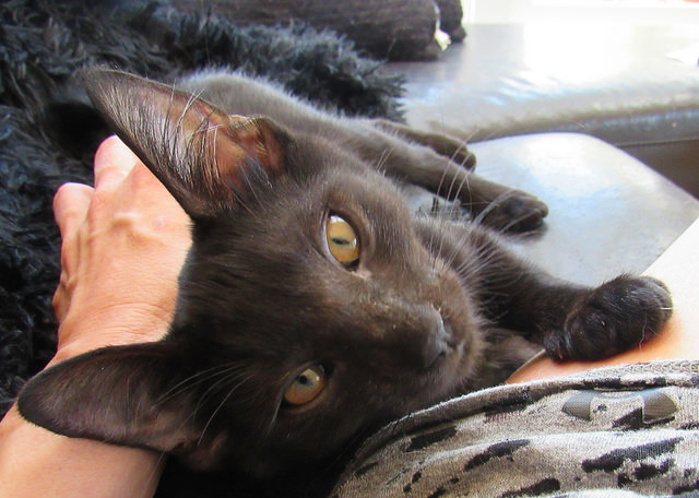 Scrappy, the World's Most Loving Cat