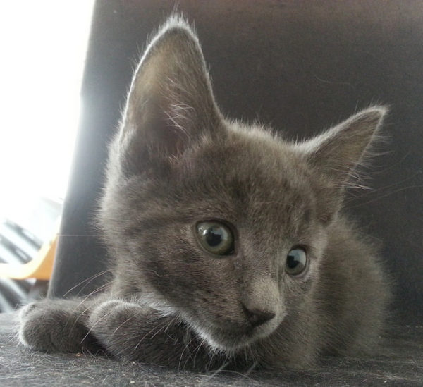 Intrigued Kitten