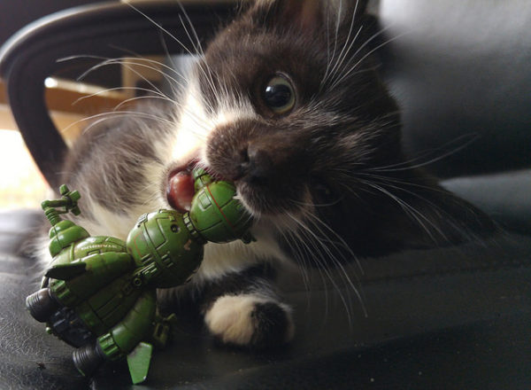 Kitten with Starbug